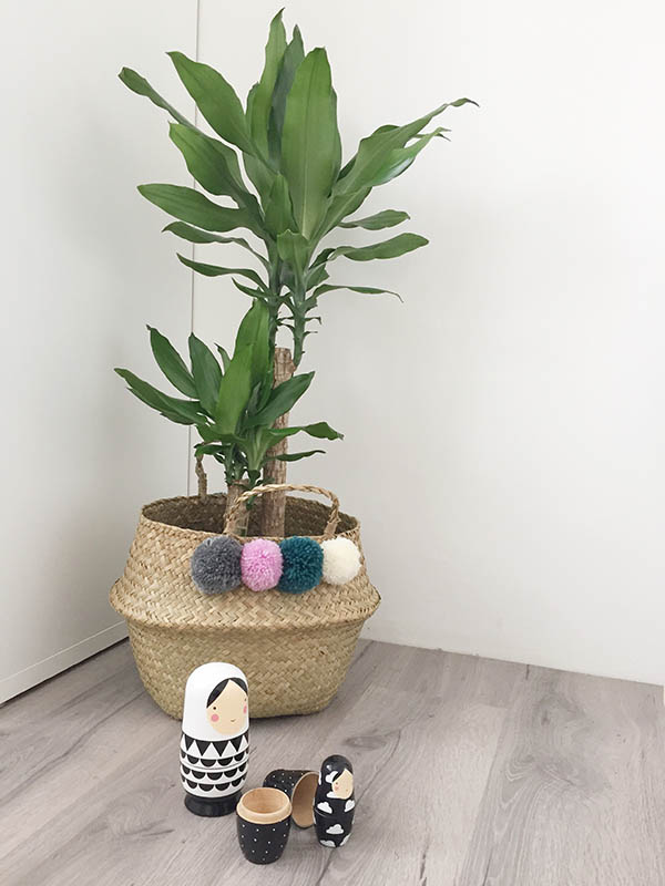 plant in kinderkamer dracaena kopen